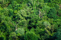 bosco per imprenditori